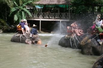 Elephant spraying tourists